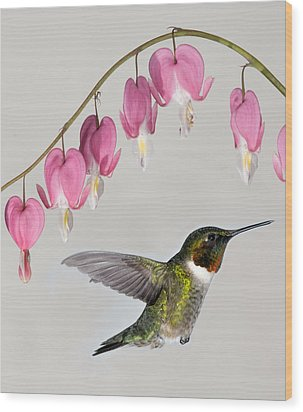 Wood Print featuring the photograph Ruby-throated Hummingbird With Bleeding Hearts by Lara Ellis