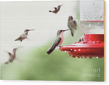 Wood Print featuring the photograph Ruby-throated Hummingbirds by Stephanie Frey
