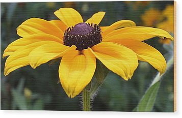 Rudbeckia Bloom Up Close Wood Print by Bruce Bley