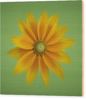 Rudbeckia Blossom Irish Eyes - Square Wood Print