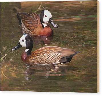 Wood Print featuring the digital art White-faced Whistling Duck by Chris Flees