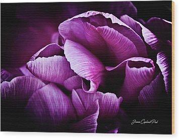Ruffled Edge Tulips Wood Print