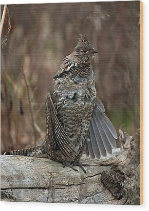 Ruffled Grouse Drumming Wood Print by Gary Langley