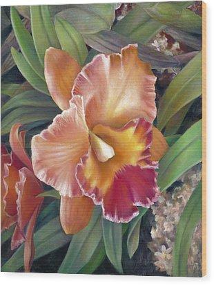 Ruffled Peach Cattleya Orchid Wood Print by Nancy Tilles