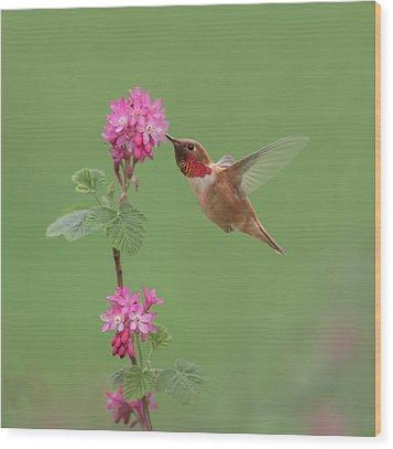 Wood Print featuring the photograph Rufous Hummingbird Enjoying Sweet Nectar by Angie Vogel