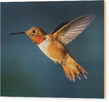 Rufous Wood Print by Martina Thompson