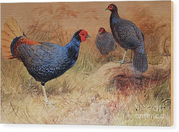 Rufous Tailed Crested Pheasant Wood Print by Joseph Wolf