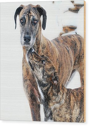 Wood Print featuring the photograph Rufus And Ava by Lila Fisher-Wenzel