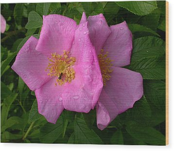 Rugosa Rose Wood Print by Raju Alagawadi