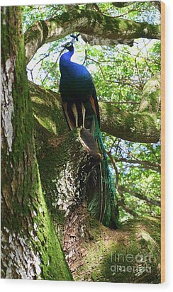 Ruler Of The Roost Wood Print by Mary Deal