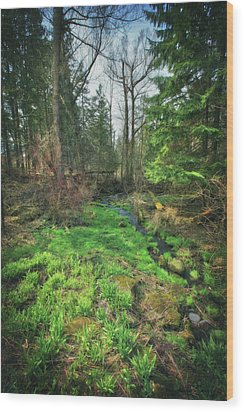 Running Creek In Woods - Spring At Retzer Nature Center Wood Print by Jennifer Rondinelli Reilly - Fine Art Photography