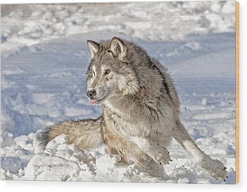 Running Wolf Wood Print