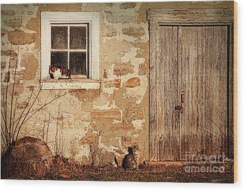 Rural Barn With Cats Laying In The Sun  Wood Print by Sandra Cunningham