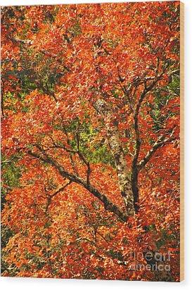 Rush Of Red Wood Print