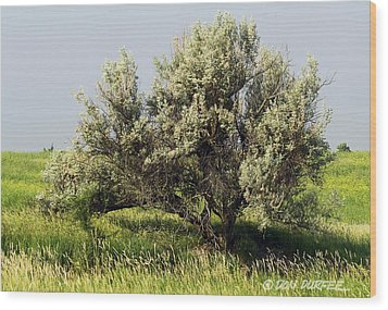 Wood Print featuring the photograph Russian Olive On The Prairie by Don Durfee
