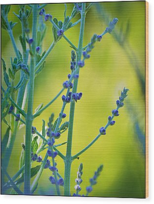 Wood Print featuring the photograph Russian Sage by Douglas MooreZart