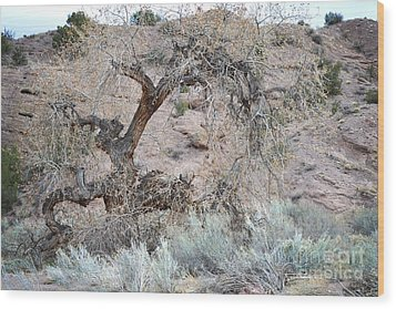 Wood Print featuring the photograph Rustic Desert Tree by Andrea Hazel Ihlefeld