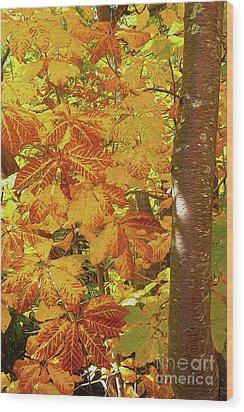 Rusty Autumn Fall Color Leaves In The Blue Ridge Ap Wood Print by Dan Carmichael