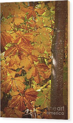 Rusty Autumn Fall Color Leaves In The Blue Ridge Wood Print by Dan Carmichael