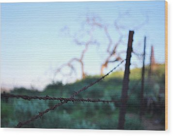 Wood Print featuring the photograph Rusty Gate Rural Tree 2 by Matt Harang