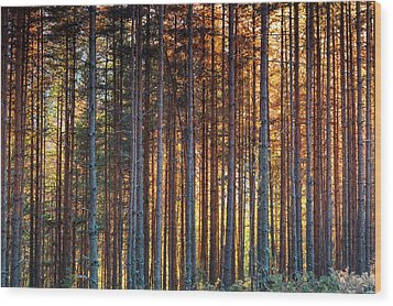 Rusy Forest Wood Print by Evgeni Dinev