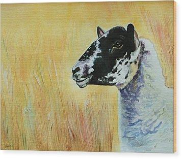 Rutland Sheep  Wood Print by Lucy Deane