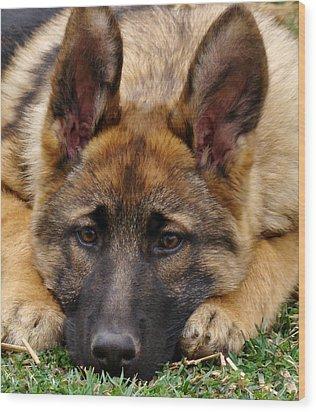 Sable German Shepherd Puppy Wood Print by Sandy Keeton