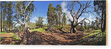 Sacred Canyon, Flinders Ranges Wood Print by Bill Robinson