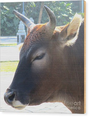 Wood Print featuring the photograph Sacred Cow 4 by Randall Weidner