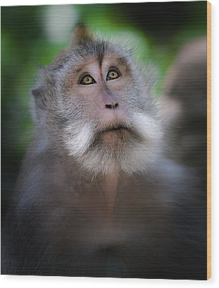Sacred Monkey Forest Sanctuary Wood Print by Larry Marshall