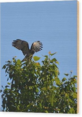 Safe Landing Wood Print by Linda Larson
