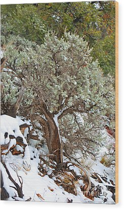 Wood Print featuring the photograph Sage Brush Williams Arizona by Donna Greene
