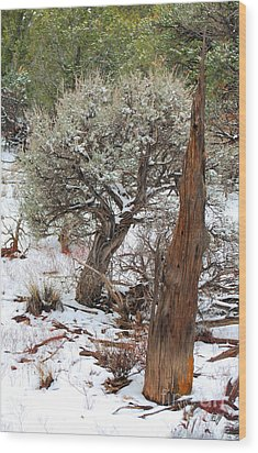 Wood Print featuring the photograph Sage Bush Grand Canyon by Donna Greene