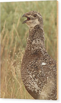 Wood Print featuring the photograph Sage Grouse Calling by Max Allen