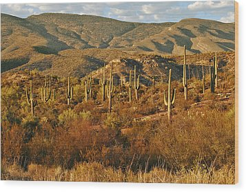 Saguaro Cactus - A Very Unusual Looking Tree Of The Desert Wood Print by Christine Till