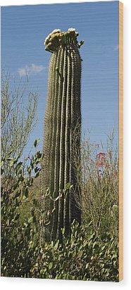 Wood Print featuring the photograph Saguaro Cactus by Daniel Hebard