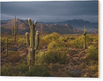 Saguaro Sunset At Four Peaks Arizona Wood Print