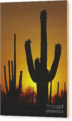 Saguaro Sunset Wood Print by Sandra Bronstein