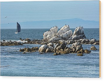 Wood Print featuring the photograph Sailboat At Bird Rock by Susan Wiedmann