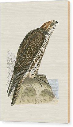 Saker Falcon Wood Print by English School