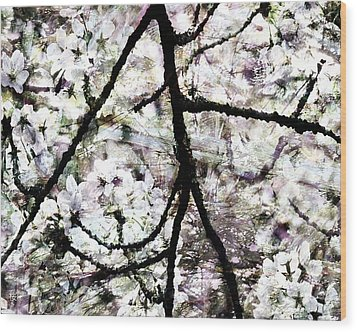 Sakura Wood Print by Ken Walker