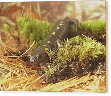 Sally The Spotted Salamander Wood Print