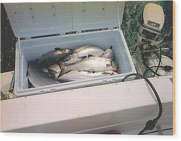 Wood Print featuring the photograph Salmon Catch Of Day by Judyann Matthews