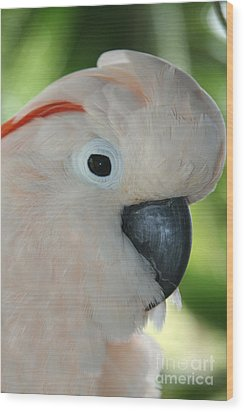 Salmon Crested Moluccan Cockatoo Wood Print by Sharon Mau