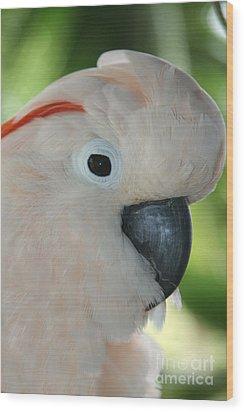 Salmon Crested Moluccan Cockatoo Wood Print by Sharon Mau