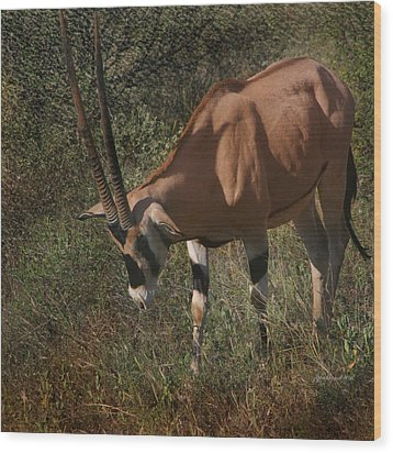 Samburu Oryx Wood Print