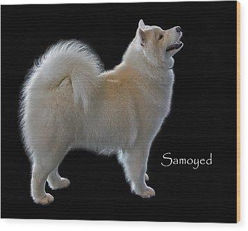 Samoyed Wood Print