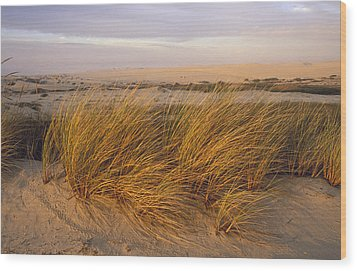Sand Dunes At Oso Flaco Nature Wood Print by Rich Reid