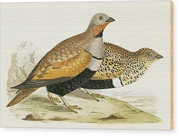 Sand Grouse Wood Print