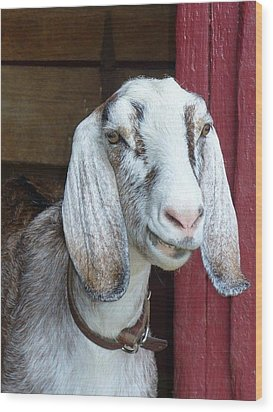 Wood Print featuring the photograph Sandburg Goat by Sarah Crumpler
